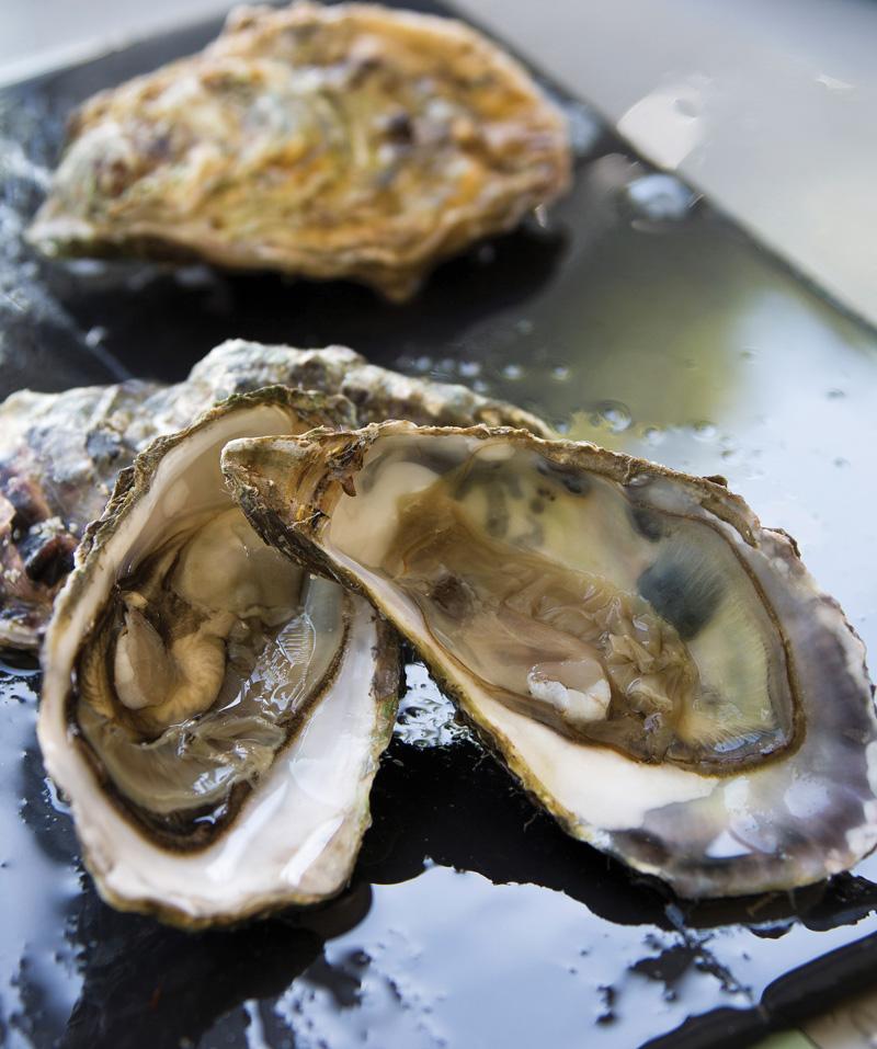 huitres, bourriche, élevée en mer, ostréiculture, qualité, nature, bretagne, marennes