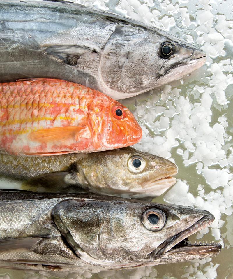 poissons frais, qualité, france, mareyeur, bar, rouget