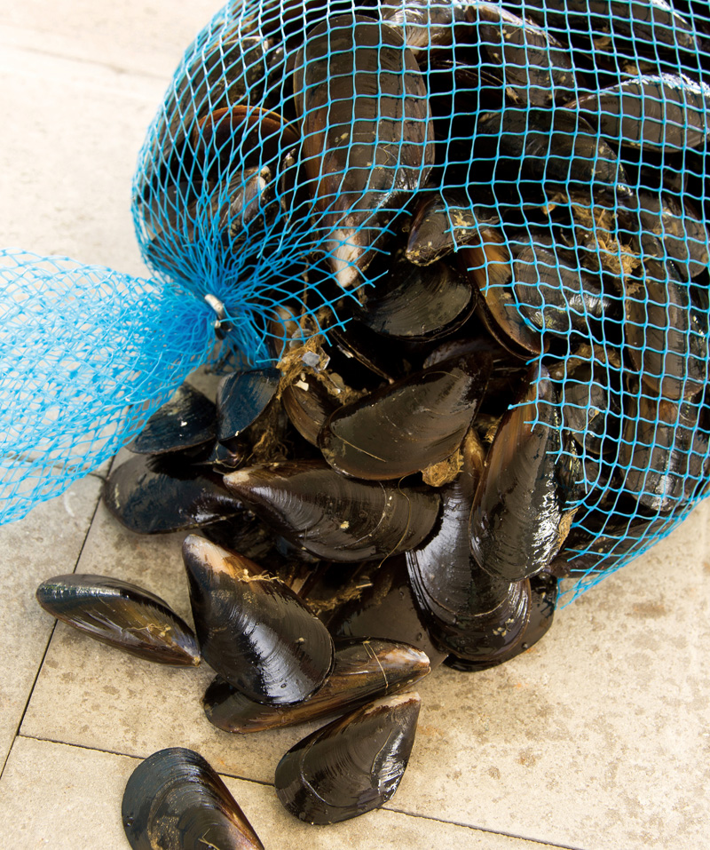 moules, bouchot, vente, maree, pêche, restauration, poissonnerie