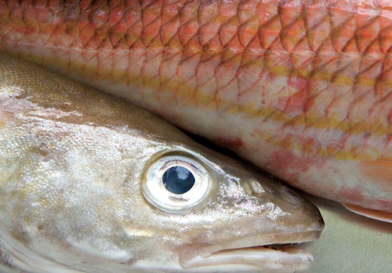 poissons frais, vivants, expédition, vente, maree, mareyeur, poissonnerie, traiteur, restauration
