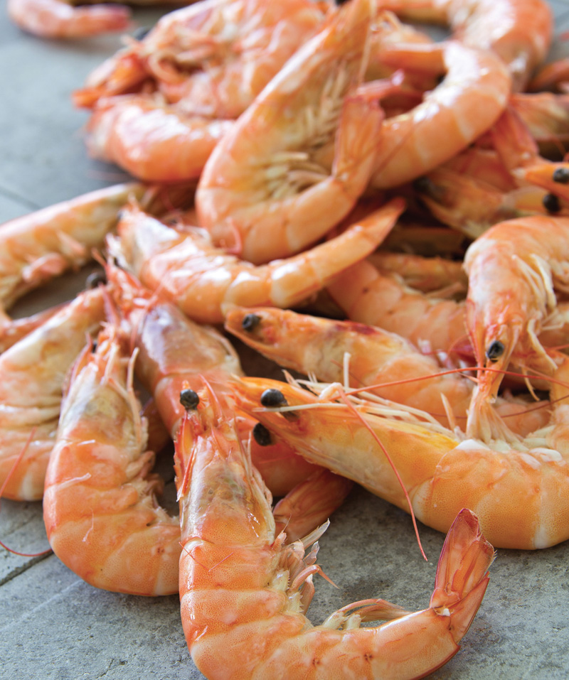 crevettes, crustacés, auvergne maree, mareyeur, restauration, poissonnerie