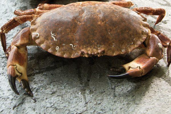 Coquillages, crustacés, vivants, homard, araignées, tourteaux, saint-jacques, praires